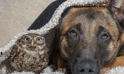 10 animalitos que adoptaron hijos de otras especies
