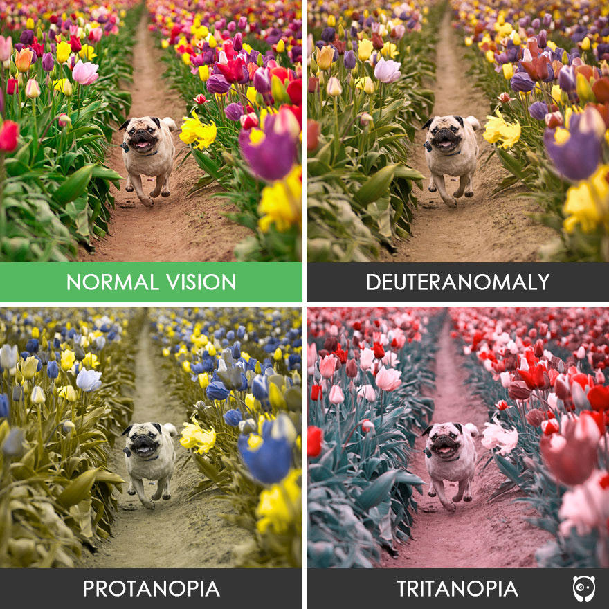 Un vistazo al mundo de los daltónicos, ¿cómo perciben ellos el mundo?