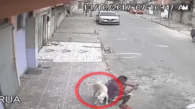 Perrito callejero orinó a un hombre y fue adoptado