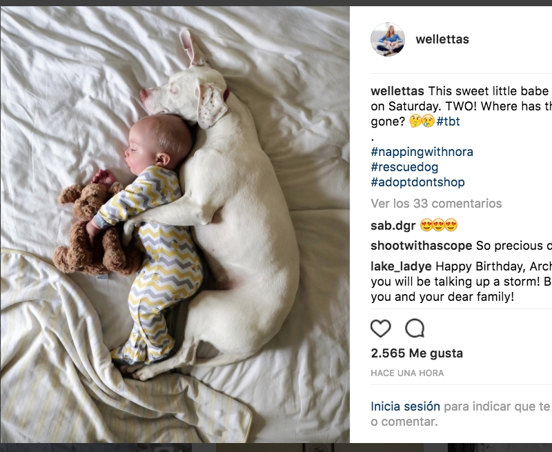 Perrita Maltratada, Maltrato Animal, Perrita, Bebé, Niño, Perros