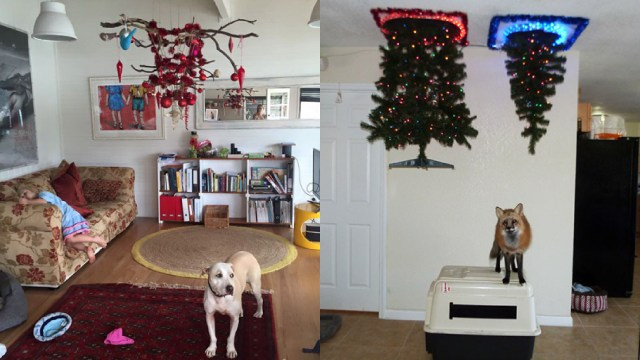 Árbol, Navidad, Proteger, Mascotas, Perros, Gatos