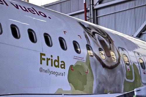 Imagen de Frida en un avión de Volaris