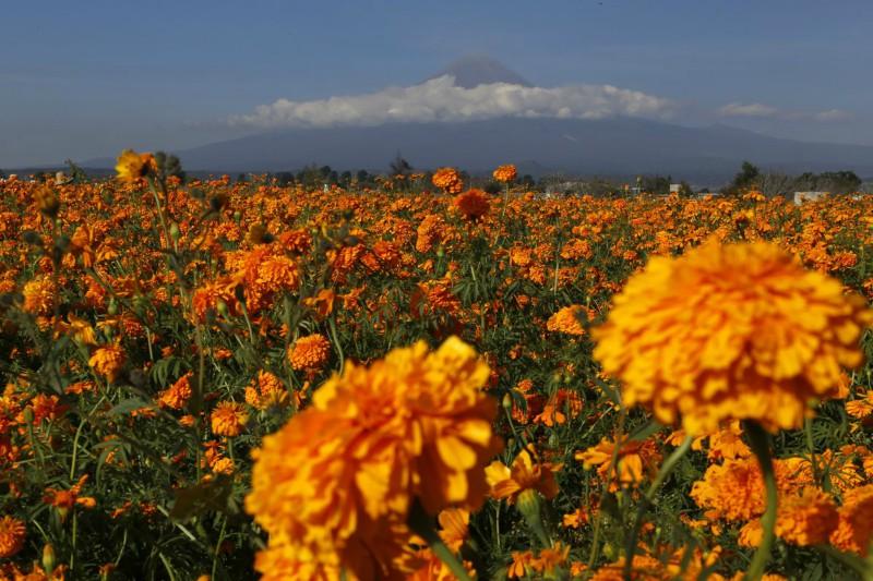 México importa semilla de cempasúchil de China y Estados Unidos