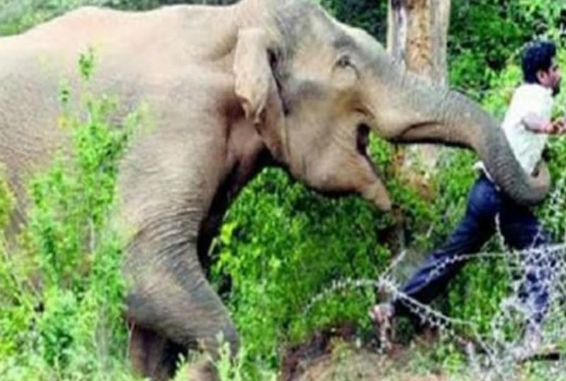 Elefante mata a un hombre que quiso una selfie con él
