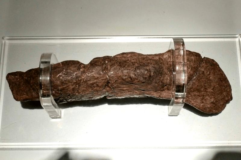 Excremento humano fosilizado más grande y valioso del mundo
