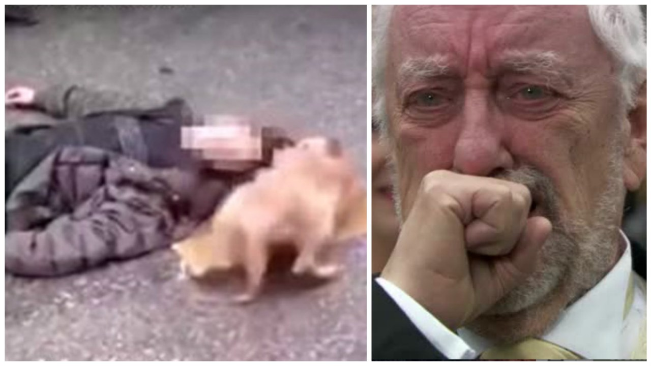 Perrito rompe corazones en Internet al tratar de revivir a su dueño