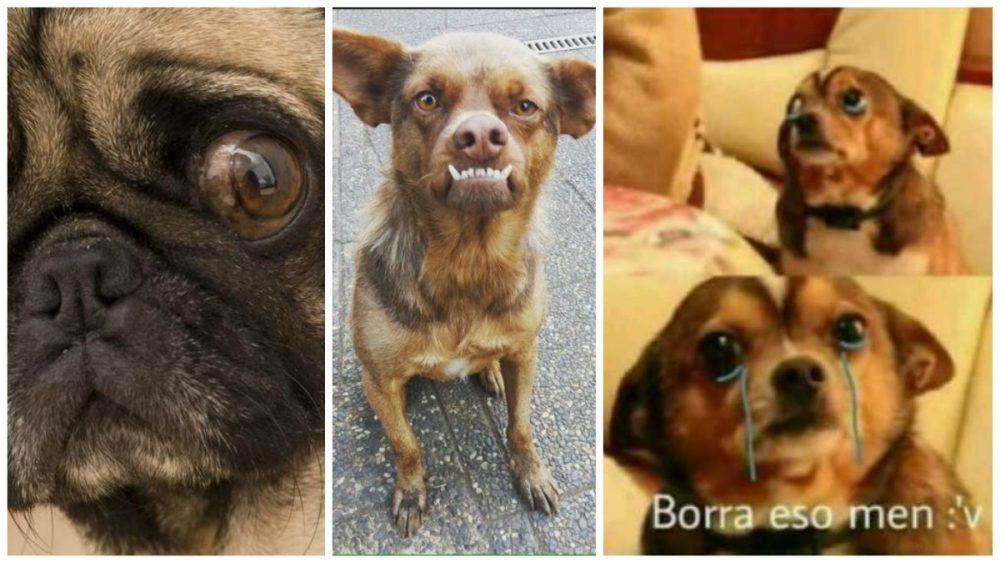 Ataques de Ansiedad, Mascotas, Perros, Perrhijos, Ansiedad, UNAM