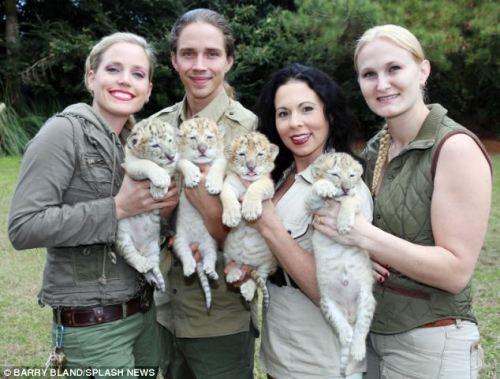 Tigre Blanco, Tigre Albino, León Albino, Tigresa, Liger, Tigre
