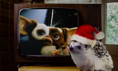 Películas, Familia, Feliz, Navidad, 2017, Online