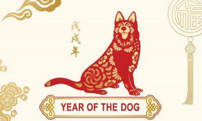 2018-ano-del-perro