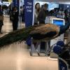 Animales que han intentando subir a un avión como apoyo emocional