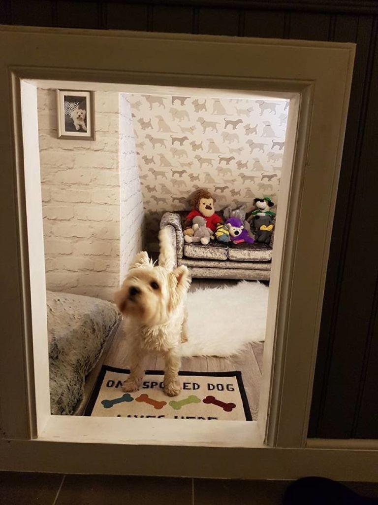 Pareja con perrijo deciden darle una hermana mayor y de paso su propio cuarto