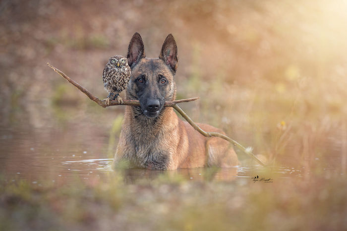 perrito-hubo-1