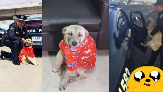 Perrito rescatado es la nueva mascota de la Policía Federal