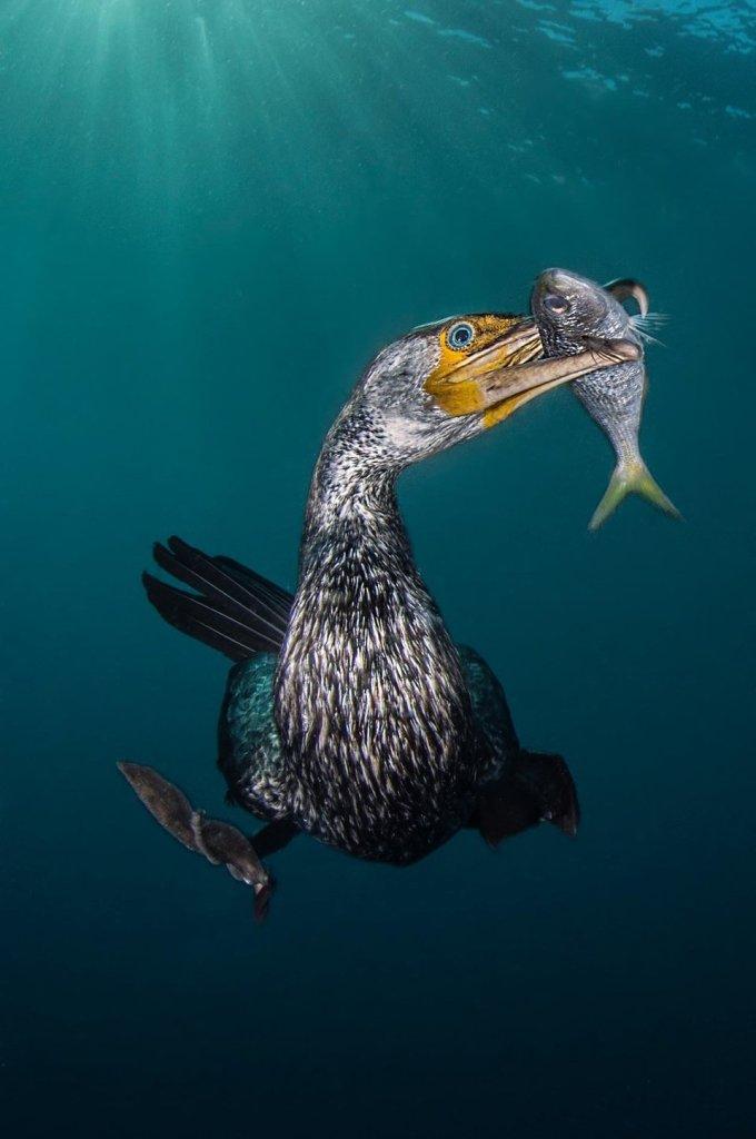 Estos fotógrafos ganaron premio a la mejor fotografía bajo el agua