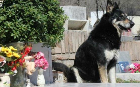 imagen-del-perro-capitan-que-murio-diez-anos-despues-de-la-muerte-de-su-amo