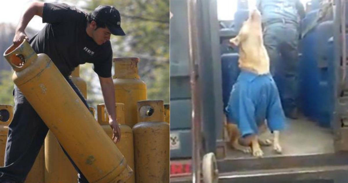 perro-gasero-que-ladra-cuando-escucha-el-grito-del-gas-en-mexico