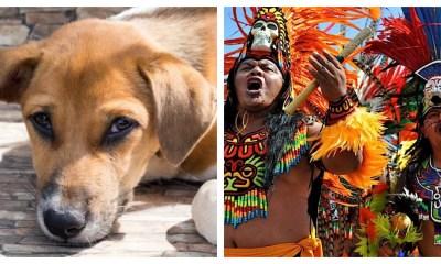 perro-danzantes-centro-historico