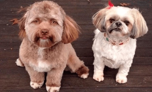 Bob perro con cara humana
