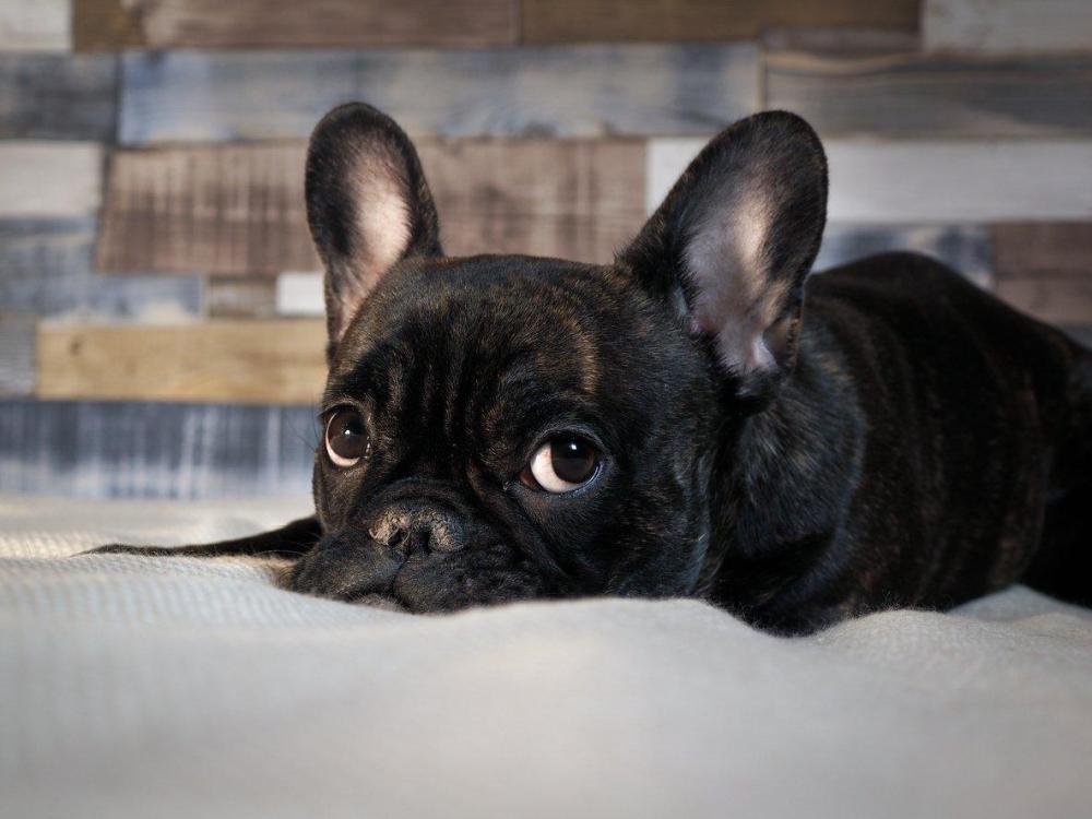 Cachorro murió durante vuelo de United Airlines por culpa de sobrecargo