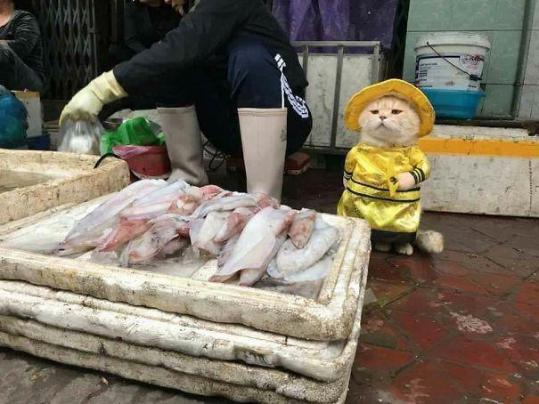 disfraz-gato-pescadero-vietnam-tierno-viraliza-internet-redes-sociales