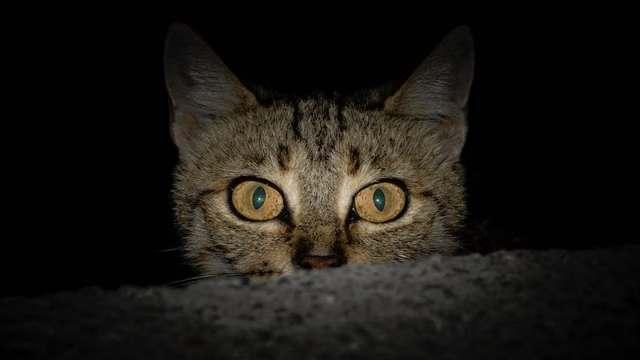 Fotos demuestran que los gatos no respetan nada