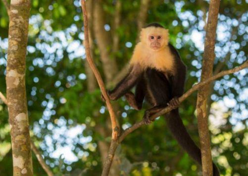 Mono en paseo de la reforma