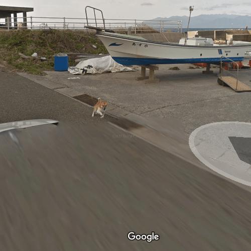 Perrito persigue camión de Google Street View