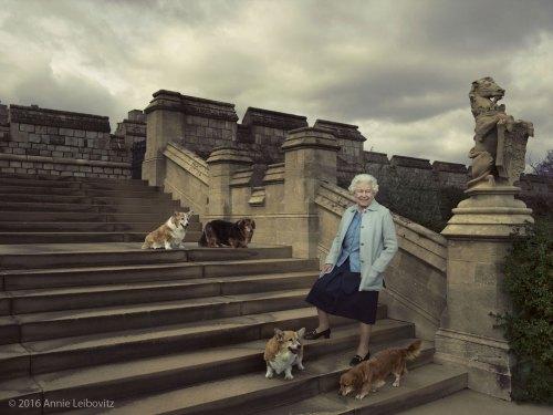 Muere willow, el último corgi de la reina Elizabeth II