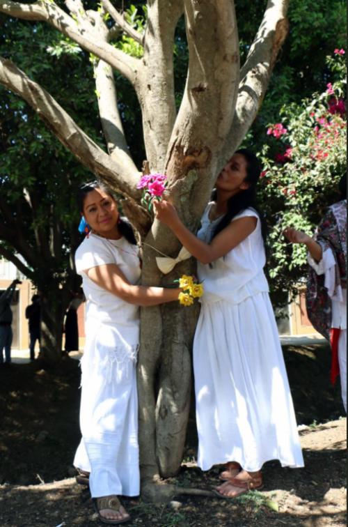 bodas-casarse-oaxaca-arboles-bosques