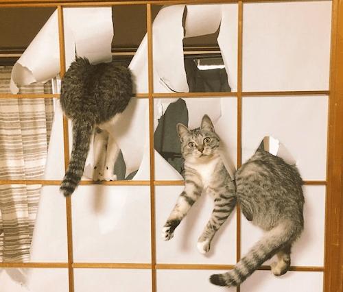 gatitos-haciendo-travesuras-5A