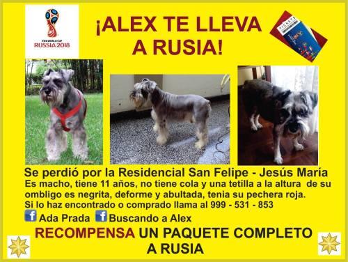 Ofrecen viaje a Rusia por encontrar a perro perdido