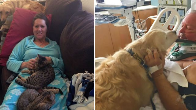 fotos-revelan-amor-incondicional-mascotas-galeria-perros-gatos