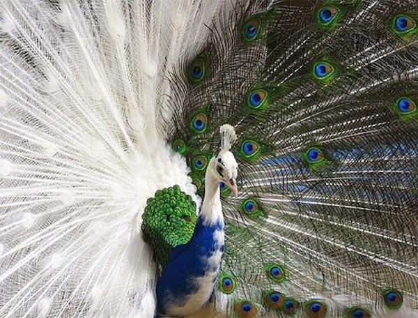 Animales a los que la naturaleza coloreó de forma magistral