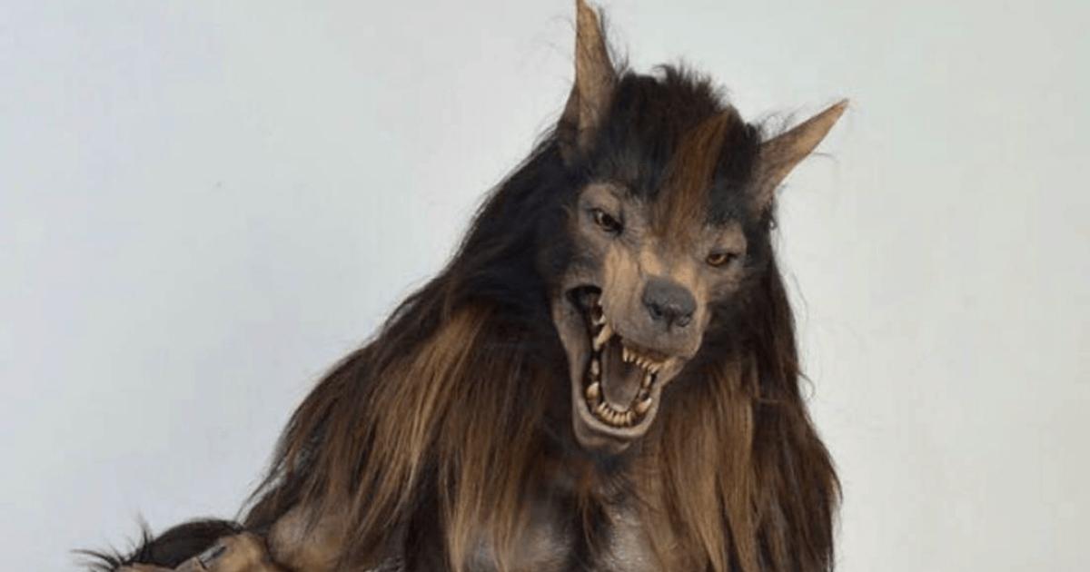 Nueva Mascota, Lobos BUAP, Mascota, Lobos BUAP, Hombre Lobo, LigaMX