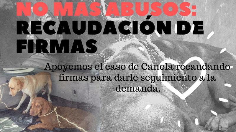 La historia de Canela, la perrita que fue violada en México