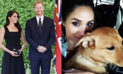 Meghan Markle Principe Harry Nuevos Perros, Perro, Labrador, Perros Familia Real, Perros Meghan Markle, Meghan Markle