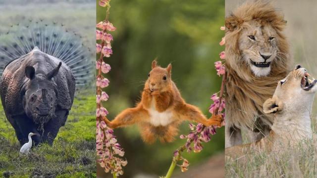 Las fotos más divertidas de animales durante 2018