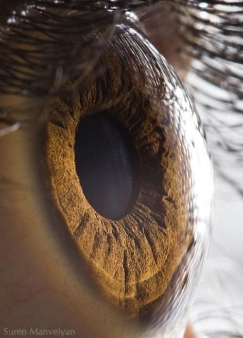 Ojos humanos