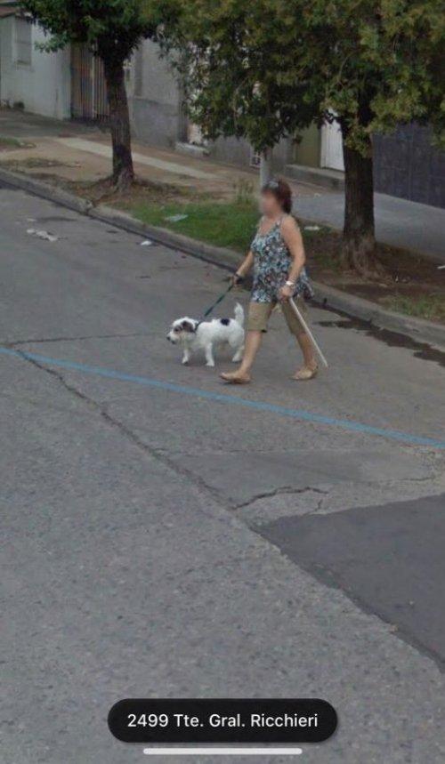 Perritos De Google Maps