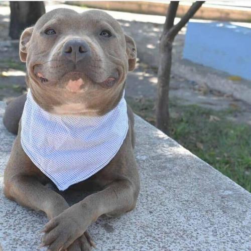 Perro arruina fotos de su dueña
