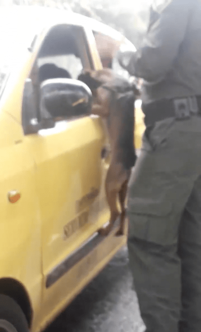 Video de perro siendo abandonado en la calle