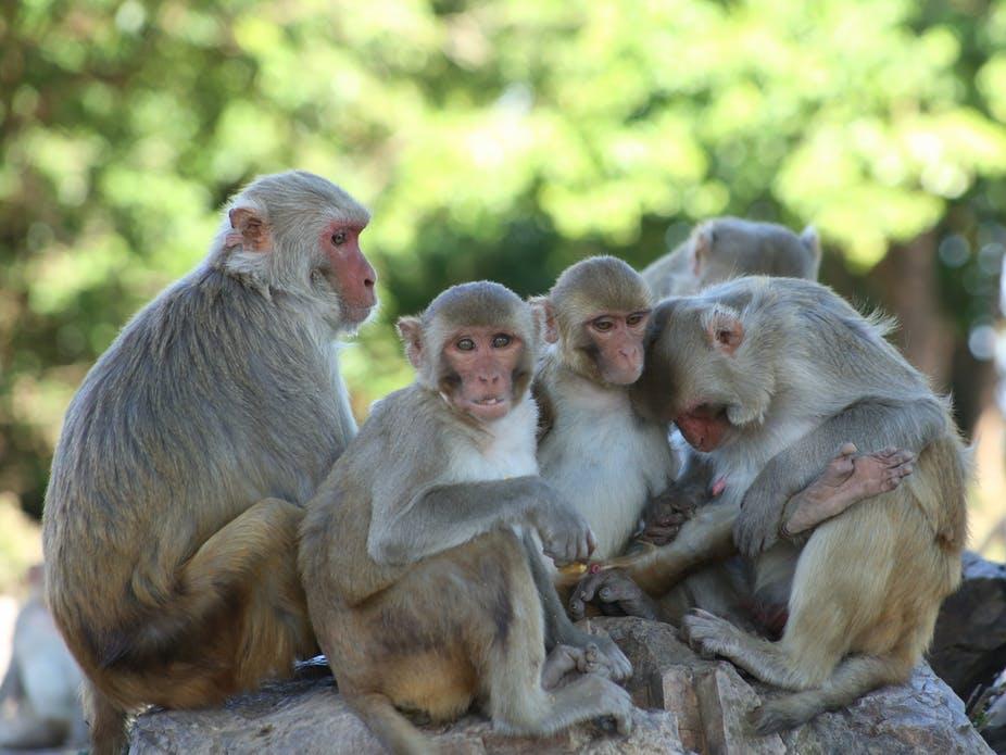 Video: monos comienzan trío con una turista desprevenida