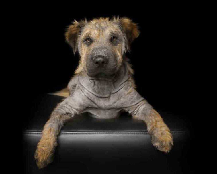 Fotos: animales con discapacidad para no olvidar su belleza