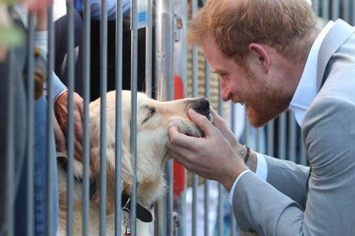 Principe Harry se detiene a acariciar perrito