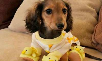 Perrhijos Trastornos Mentales Psicológicos Perritos Mascotas