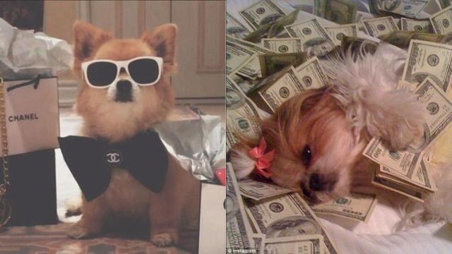 Con nueva ley, podrías dejarle tu fortuna a tus mascotas