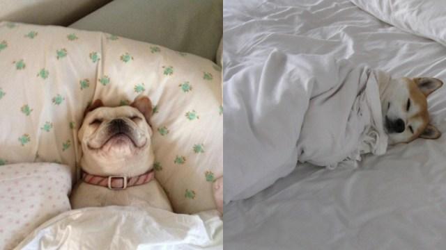 Dormir Con Perro Es Bueno, Dormir Con Perro, Perros, Dormir, Salud, Calidad Sueño