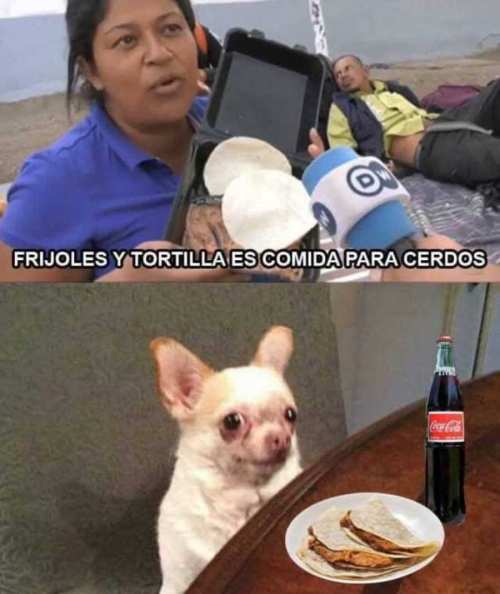memes de frijoles hondureños