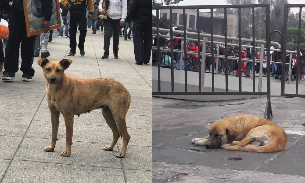 Perros Abandonados Basílica De Guadalupe, Perros Peregrinos Basílica De Guadalupe, Perros Abandonados, Perros, Basílica De Guadalupe, Día De La Virgen